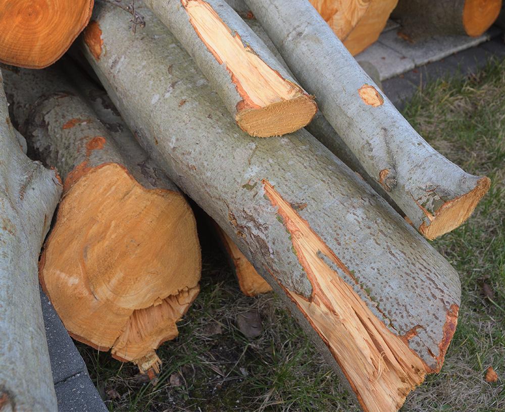 drewno1.jpg