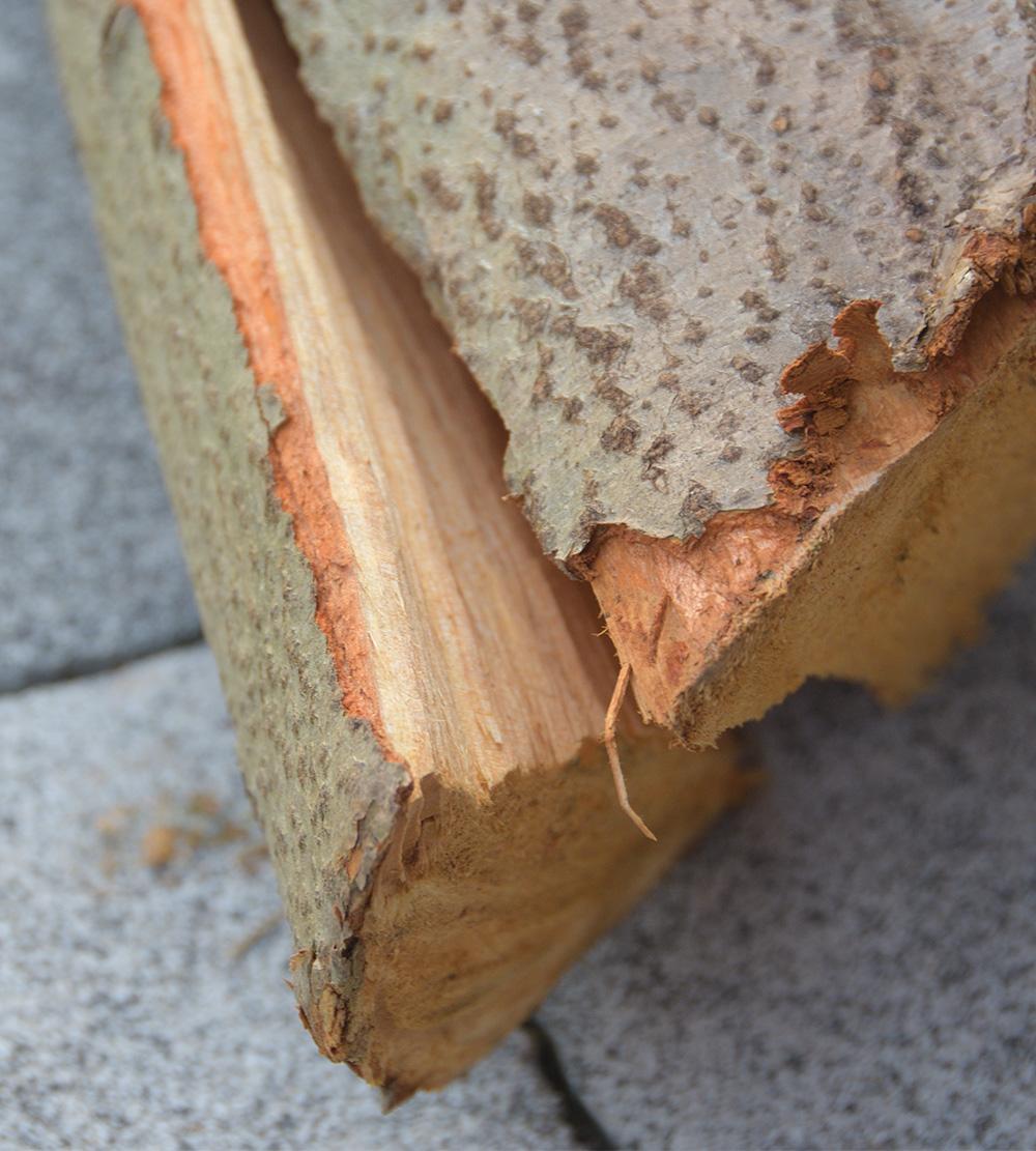 drewno3.jpg