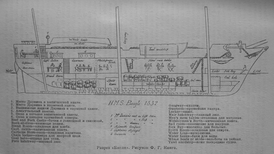 HMS_Beagle_1832_longitudinal_section.jpg
