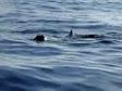 wielorybek w Norwegii - S/Y Roztocze 2010